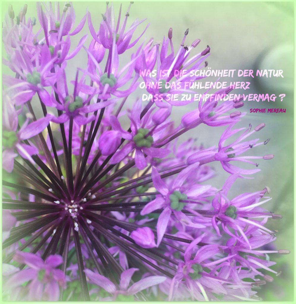 Was ist die Schönheit der Natur...